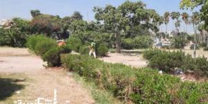 «زراعة الإسكندرية» تكافح سوسة النخيل الحمراء بأشجار أنطونيادس والنزهة بمبيد «زينو كام 48%»