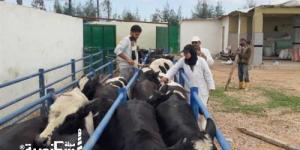 «بيطرى الإسكندرية» تحصين 44 ألف رأس ماشية وطائر ضد الحمى القلاعية والنيموباك والأنفلونزا