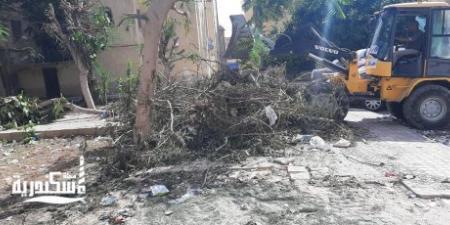 حي الجمرك يواصل العمل ويرفع  ١٦ طن قمامة من الشوارع والميادين
