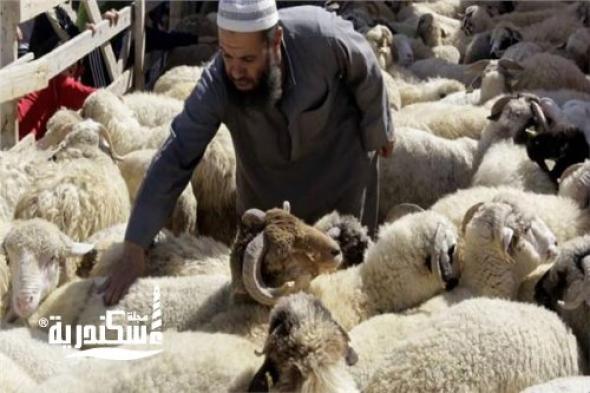 تعرف على خطة المحافظة لاستقبال عيد الأضحى المبارك